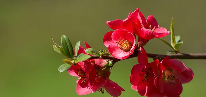 Blooming-700